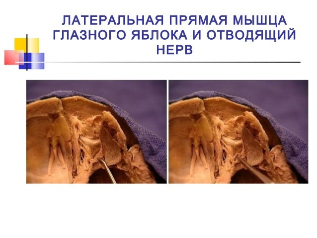 u0447 u0435 u0440 u0435 u043f u043d u044b u0435  u043d u0435 u0440 u0432 u044b cranial nerves