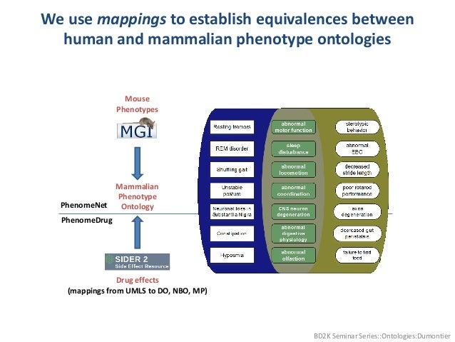 We use mappings to establish equivalences between human and mammalian phenotype ontologies BD2K Seminar Series::Ontologies...