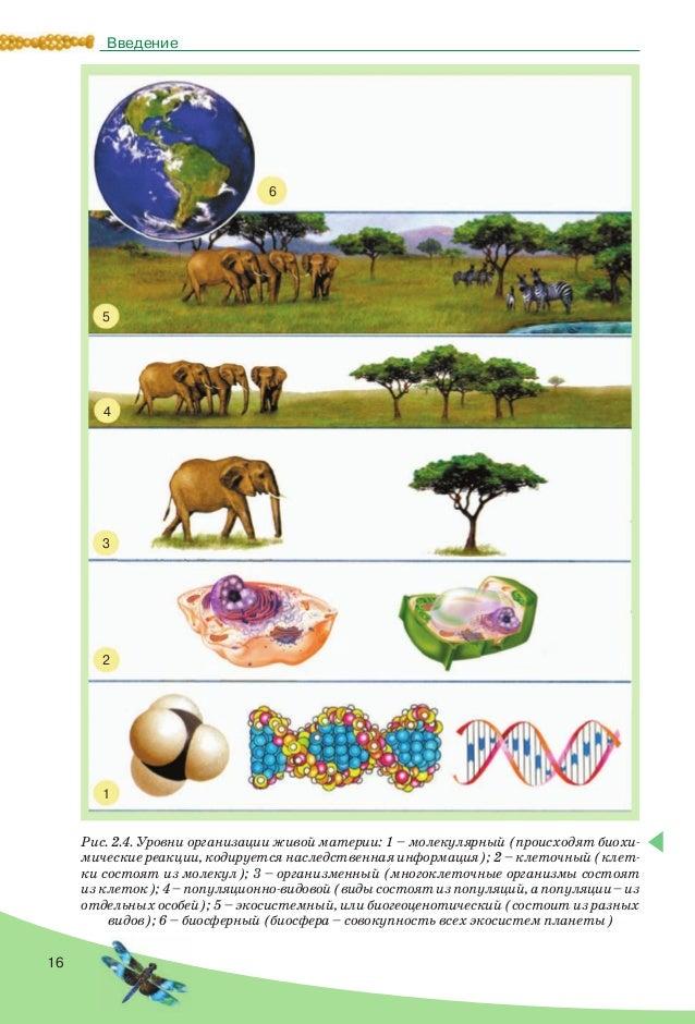 16 Введение Рис. 2.4. Уровни организации живой материи: 1 – молекулярный (происходят биохи- мические реакции, кодируется н...