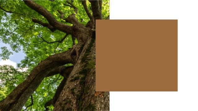 樹木知多少- 永和社區樹木健檢計畫 走在路上,你是否曾停下腳步,感受綠意盎然的樹木? 繁忙之餘,你是否曾在樹蔭下歇歇腳,暫時放鬆心情? 路邊的行道樹、公園裡的大樹、成蔭的老樹,對於我們 每天都會看到的樹木,我們了解多少呢?享受著悠閒的 同時,是...