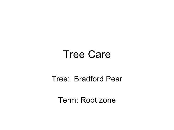 Tree Care Tree:  Bradford Pear Term: Root zone