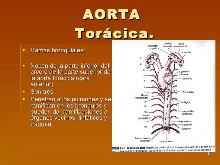 10. Aorta
