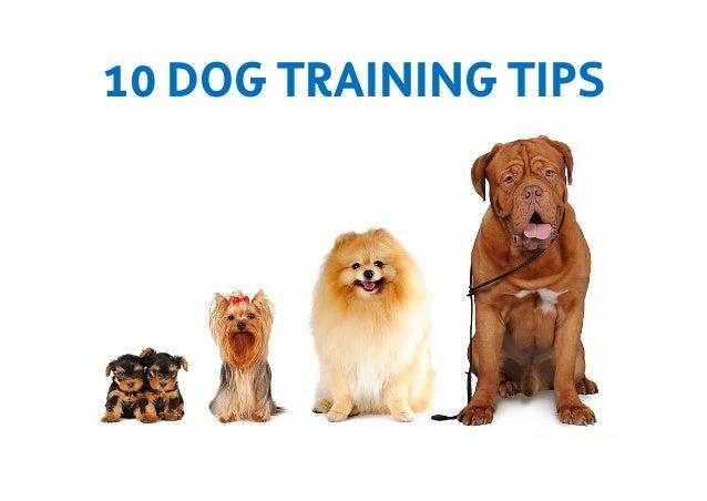 10 DOG TRAINING TIPS