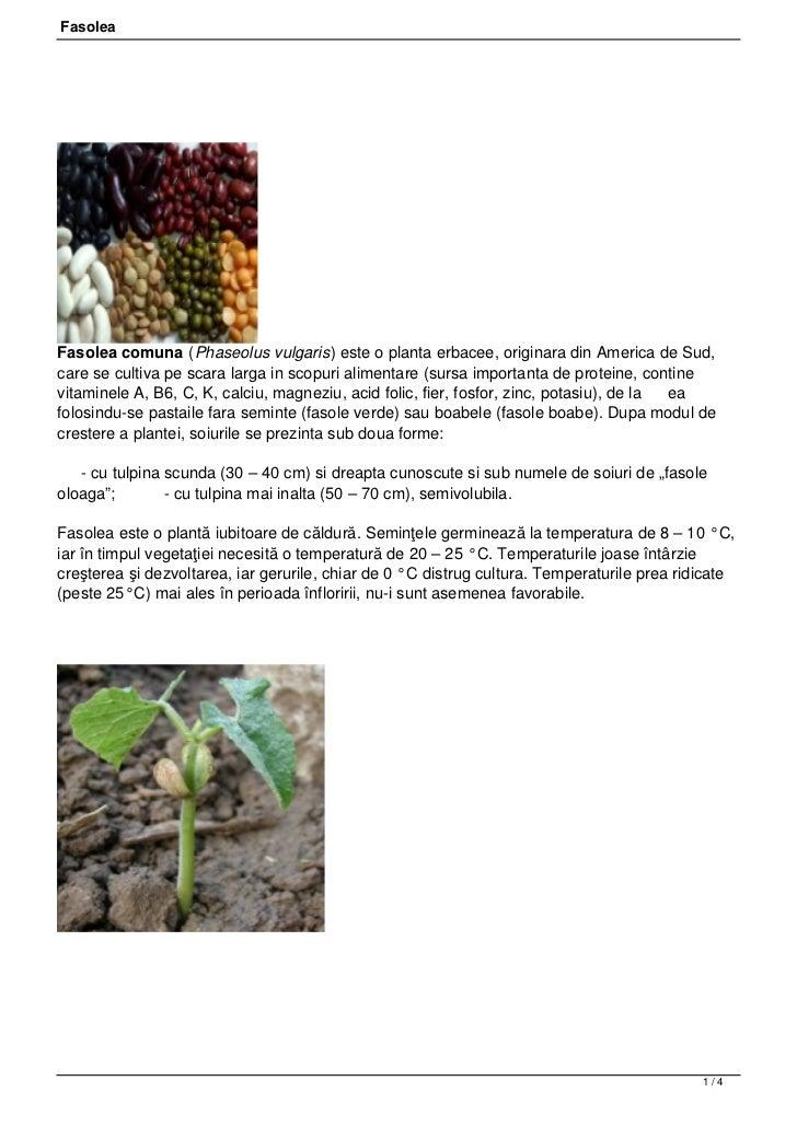 FasoleaFasolea comuna (Phaseolus vulgaris) este o planta erbacee, originara din America de Sud,care se cultiva pe scara la...