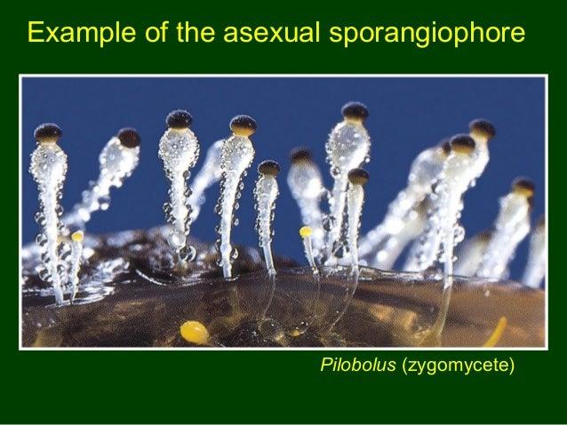 endomycorrhizal slide - photo #29