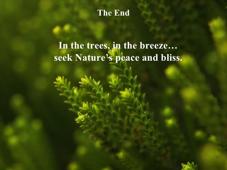 Essay on tree a gift of nature