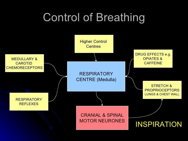 Control of Breathing RESPIRATORY CENTRE (Medulla) MEDULLARY & CAROTID  CHEMORECEPTORS Higher Control  Centres  RESPIRATORY...