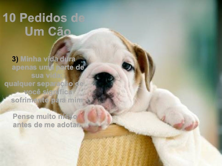 <ul><li>10 Pedidos de Um Cão </li></ul><ul><li> </li></ul><ul><li>Minha vida dura apenas uma parte de sua vida;  </li></u...