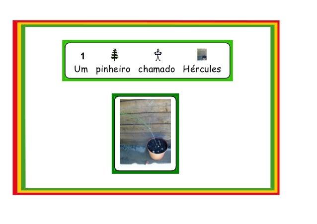 Um pinheiro chamado Hércules