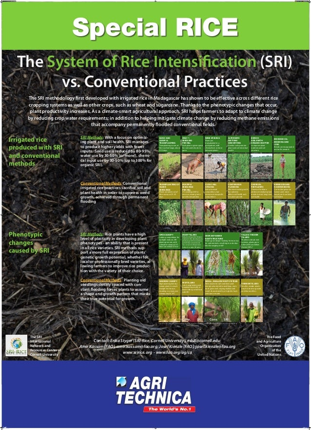 The System of Rice Intensification (SRI) vs. Conventional Practices The SRI methodology first developed with irrigated ric...