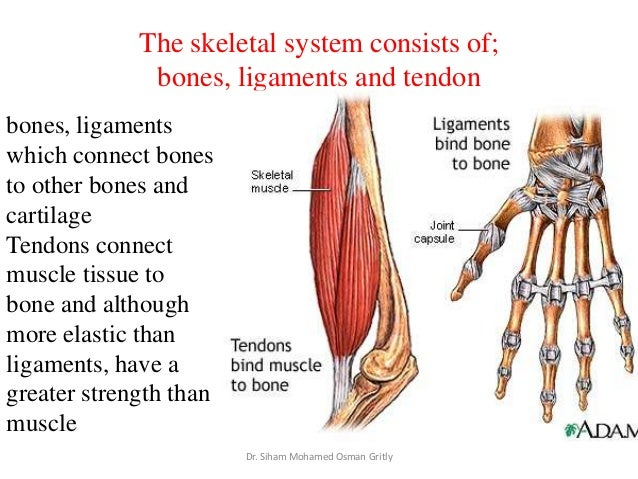 types of muscles essay About half of your body's weight is muscle muscle tissue is categorized into three distinct types: skeletal, cardiac, and smooth.