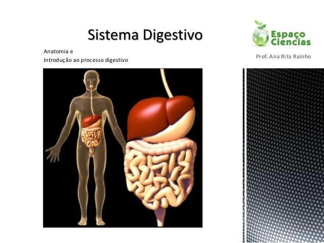 Anatomia e Introdução ao processo digestivo Prof. Ana Rita Rainho