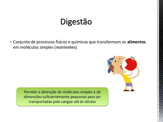 CN9-sistema digestivo Slide 2