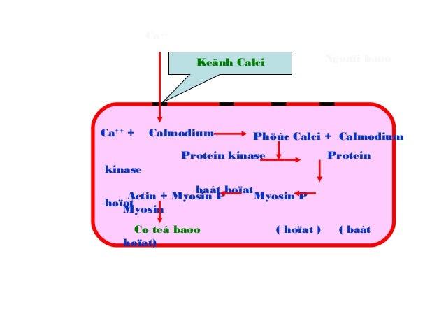 ỨC CHẾ CALCI:  Giãn cơ trơn động mạch → ↓ kháng lực ngoại biên  Cơ tim: ↓ sức co bóp cơ tim → ↓ tiêu thụ O2 cơ tim  Giã...