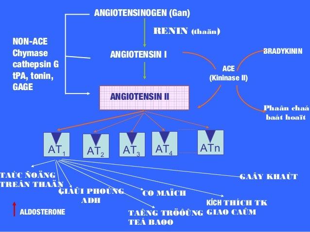 Thuốc Biệt dược Hàm lượng T1/2 Liều dùng/ ngày (lần) CANDESARTA N Atacand® 4mg 3- 11h 8- 32mg (1) IRBESARTAN Avapro® 150mg...