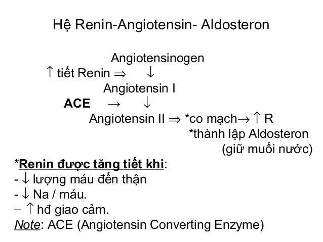 Angiotensinogen ↑ tiết Renin ⇒ ↓ Angiotensin I ACE → ↓ Angiotensin II ⇒ *co mạch→ ↑ R *thành lập Aldosteron (giữ muối nước...