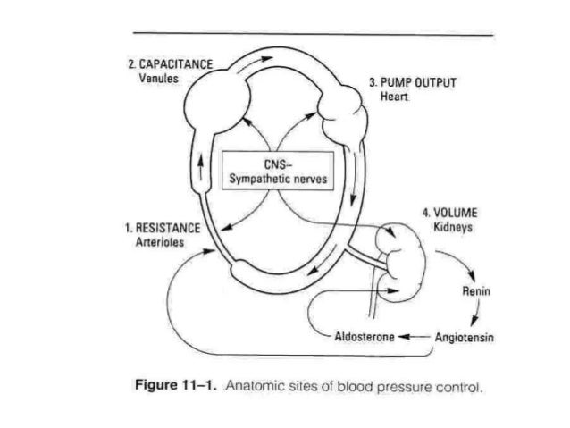 2. PHÂN LOẠI THUỐC: 2.1. Thuốc tác động hệ giao cảm: •Thuốc tác động trung ương: METHYLDOPA, CLONIDIN •Thuốc ức chế hạch: ...