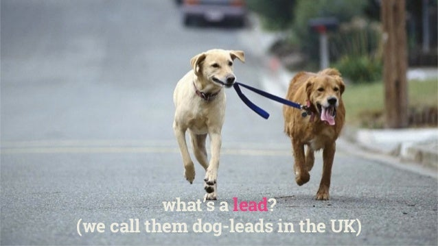 what's a lead? (we call them dog-leads in the UK)