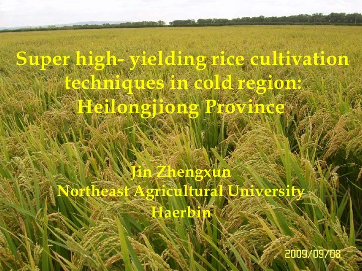 Super high- yielding rice cultivation<br /> techniques in cold region:<br />Heilongjiong Province <br />Jin Zhengxun<br />...
