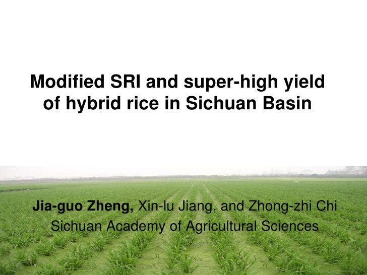 Modified SRI and super-high yield of hybrid rice in Sichuan Basin<br />Jia-guoZheng,Xin-lu Jiang, and Zhong-zhi Chi<br />S...