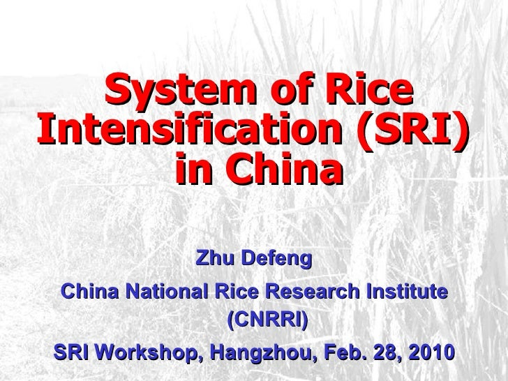 <ul><li>System of Rice Intensification (SRI)  in China </li></ul>Zhu Defeng China National Rice Research Institute (CNRRI)...