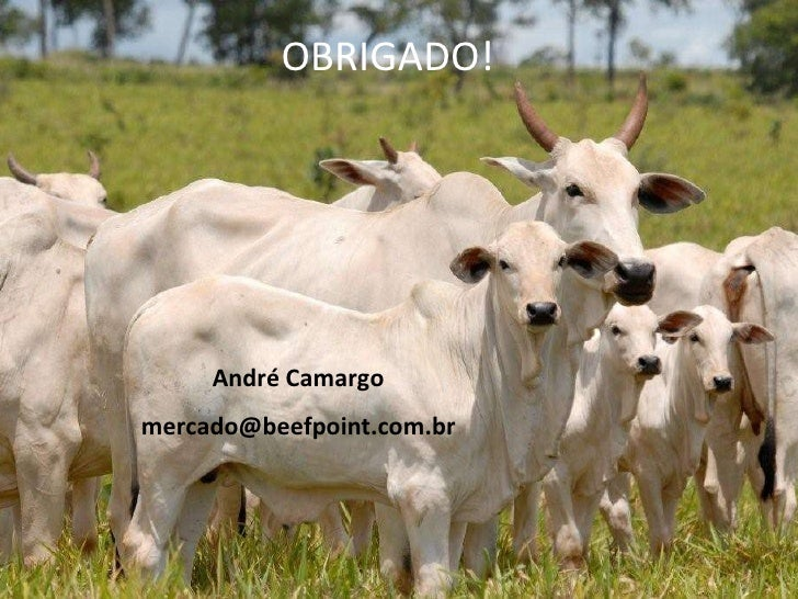 André Camargo [email_address] OBRIGADO!
