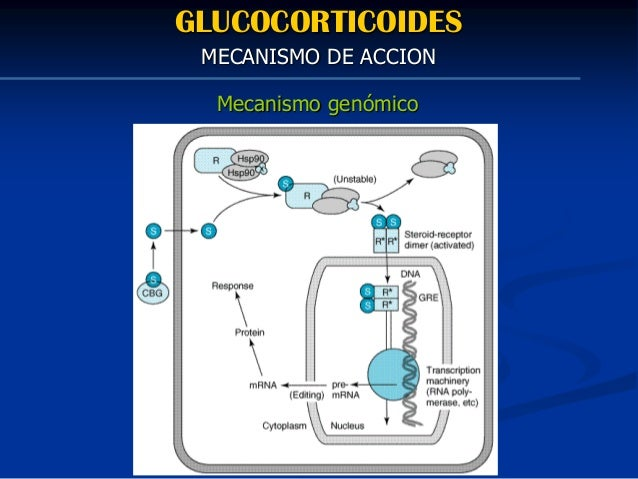 glucocorticoids and 11beta hydroxysteroid dehydrogenase type 1 in obesity and the metabolic syndrome