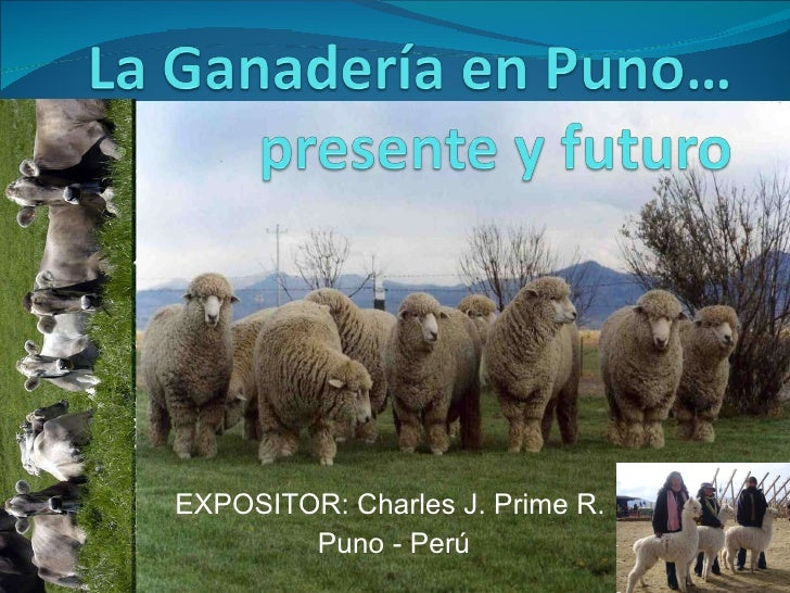 EXPOSITOR: Charles J. Prime R.  Puno - Perú