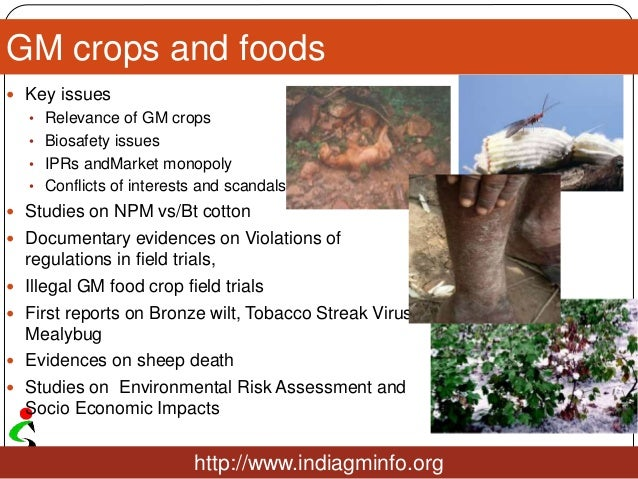GM crops and foods  Key issues • Relevance of GM crops • Biosafety issues • IPRs andMarket monopoly • Conflicts of intere...
