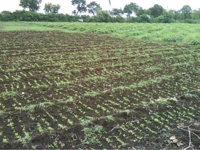 Economics from all locations Crop Cost of cultivation (Rs/Ac.) Yield (Q/Ac.) Gross Returns (Rs.) Net returns (Rs.) Organic...