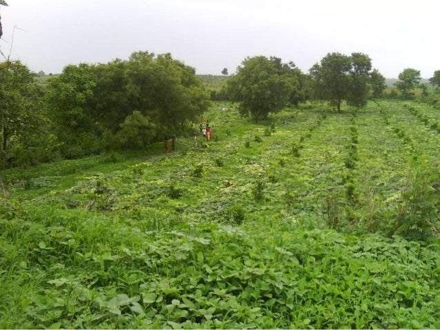 Punukula, the first pesticides-free village