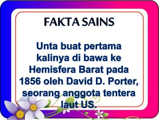 FAKTA SAI NS  Unta buat pertama kalinya di bawa ke Hemisfera Barat pada 1856 oleh David D.  Porter,  s`eorang anggota tent...