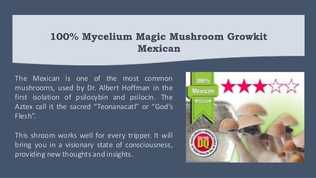 100% MYCELIUM Magic Mushroom Growkit
