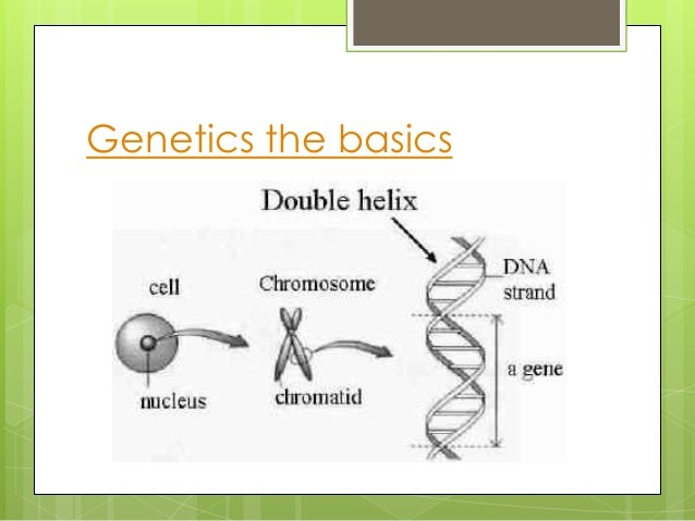 an introduction to the knowledge of genoms and dna Assuming the reader has little prior knowledge of the subject 5 introduction of dna into living cells 75 10 sequencing genes and genomes 175.