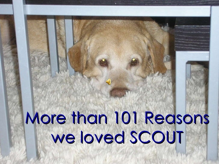 More than 101 Reasons we loved SCOUT