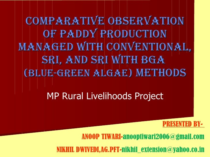 Comparative Observation of Paddy Production managed with conventional, SRI, and SRI WITH BGA  (blue-green algae)  Methods ...