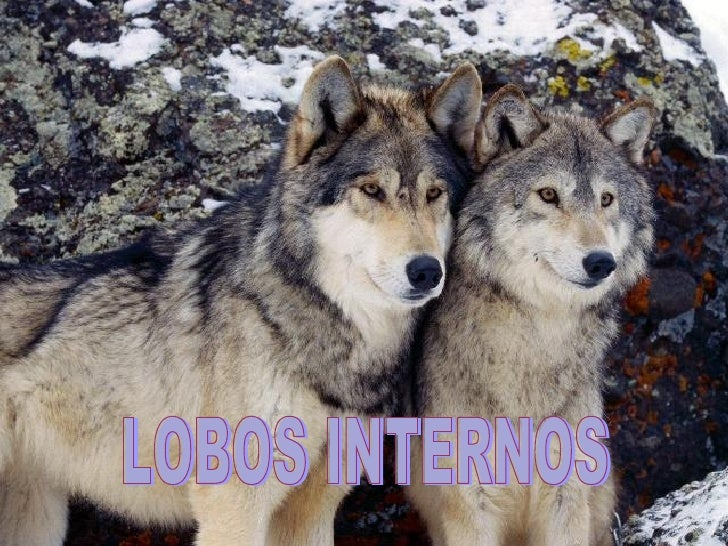 LOBOS INTERNOS