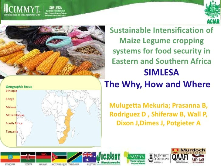 Sustainable Intensification of                       Maize Legume cropping                     systems for food security i...