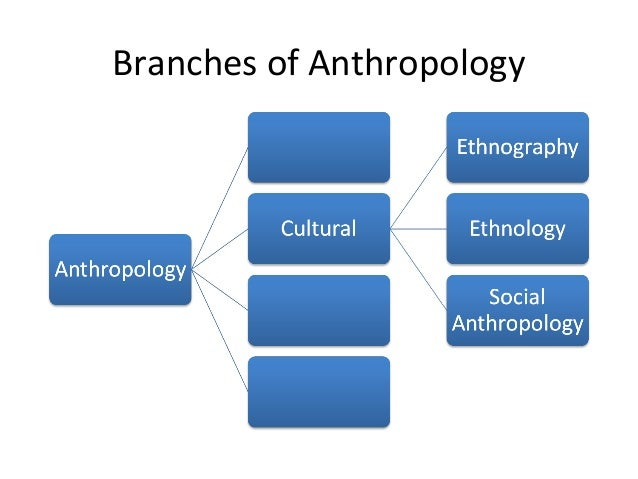 branches of anthropology Anthropology's four branches archaeology archaeology examines peoples and cultures of the past biological anthropology biological anthropology specializes in.