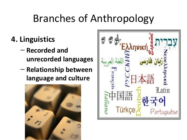 branches of anthropology pdf
