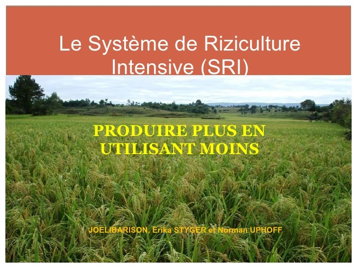 <ul><li>PRODUIRE PLUS EN UTILISANT MOINS </li></ul>Le Système de Riziculture Intensive (SRI) JOELIBARISON, Erika STYGER et...