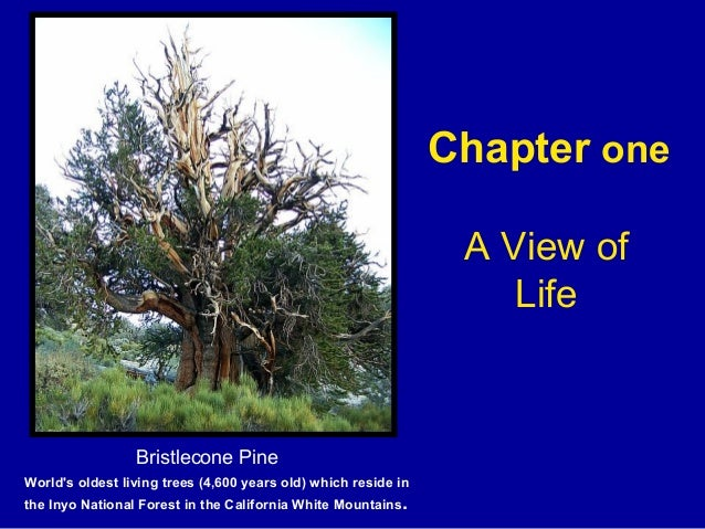 Chapter one A View of Life Bristlecone Pine World's oldest living trees (4,600 years old) which reside in the Inyo Nationa...