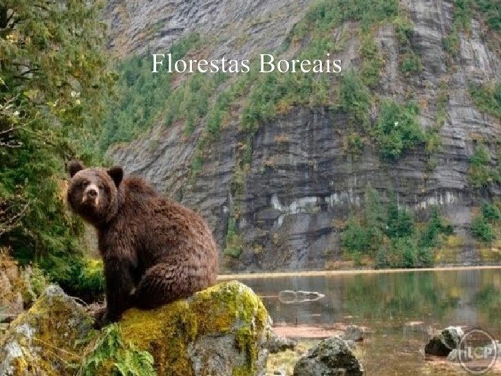 Florestas Boreais