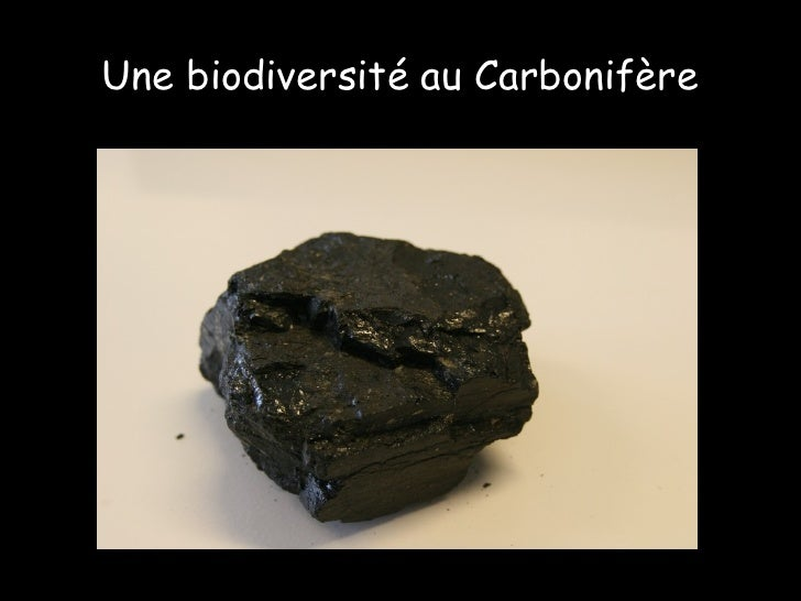Une biodiversité au Carbonifère