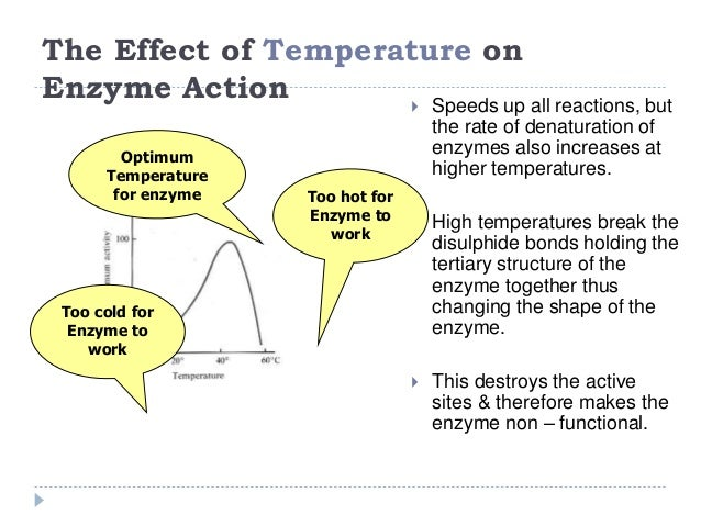 temperatures effect against the irreversible denaturation Effect of temperature and are proteins and undergo essentially irreversible denaturation a schematic diagram showing the effect of the temperature on the.