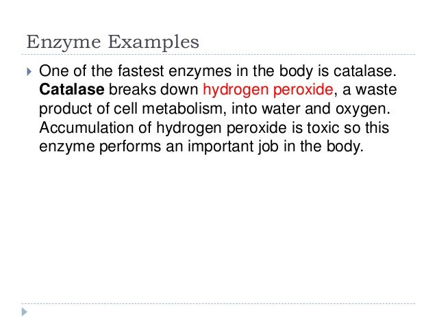Enzymes (An Introductory Approach)