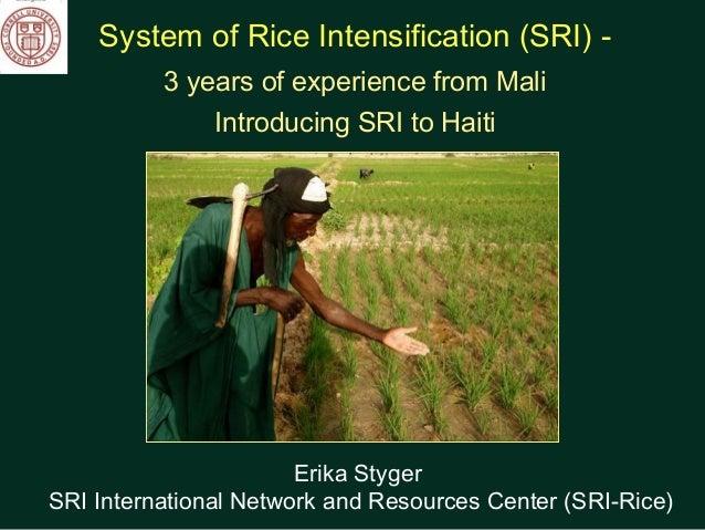 System of Rice Intensification (SRI) - 3 years of experience from Mali Introducing SRI to Haiti Erika Styger SRI Internati...