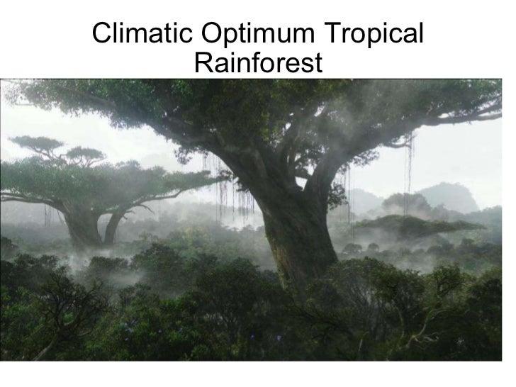 Climatic Optimum Tropical Rainforest