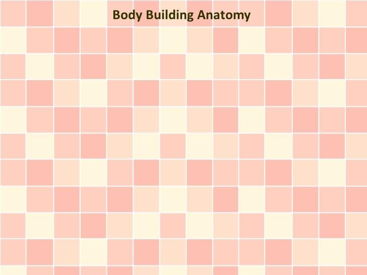 Body Building Anatomy