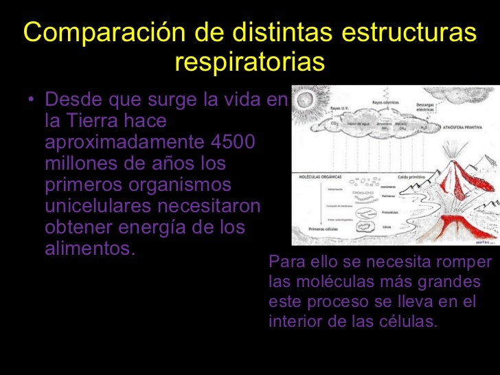 LA RESPIRACION DE LOS SERES VIVOS Slide 2